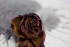 20171115-_MG_5676