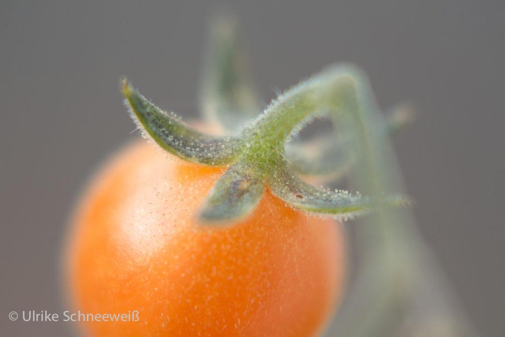orangene Frucht